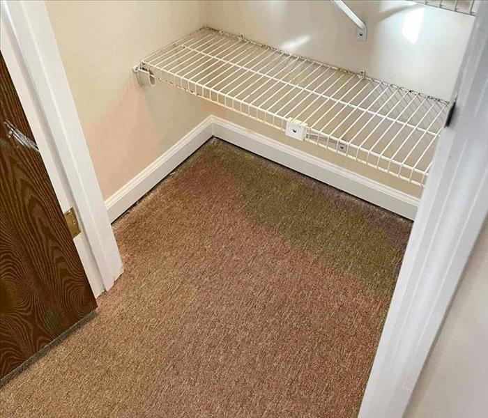 closet with carpet