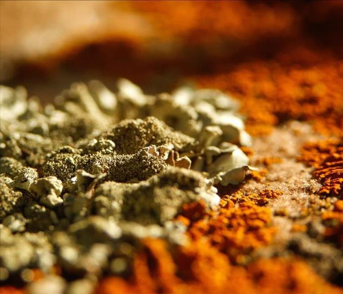 Close Up Photo of Mold